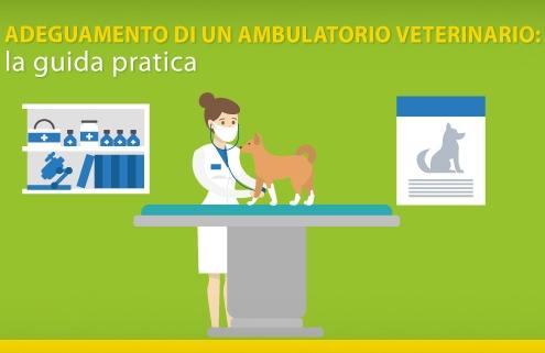 Adeguamento di un ambulatorio veterinario: la guida pratica