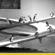 pinguin pool demolizione icone architettura anni 40